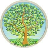 Árvore do dinheiro no prado verde Fotos de Stock Royalty Free