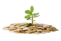 Árvore do dinheiro que cresce de uma pilha das moedas. Imagens de Stock Royalty Free