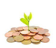 Árvore do dinheiro que cresce de uma pilha das moedas. Fotos de Stock
