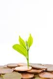 Árvore do dinheiro que cresce de uma pilha das moedas. Foto de Stock