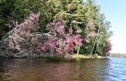 Árvore do efeito da fotossíntese com menos filamento fotografia de stock