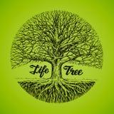 Árvore do esboço com raizes Ecologia, ambiente nave Imagem de Stock