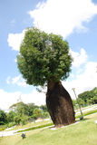 Árvore do frasco Fotografia de Stock