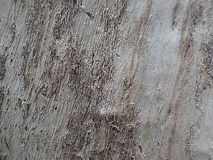 Árvore 0006 do fundo Foto de Stock Royalty Free
