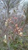 Árvore do gelo Imagem de Stock Royalty Free