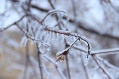 Árvore do gelo Fotos de Stock Royalty Free