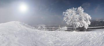 Árvore do inverno Imagens de Stock