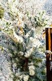 Árvore do inverno Fotografia de Stock Royalty Free