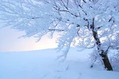 Árvore do inverno Fotos de Stock Royalty Free