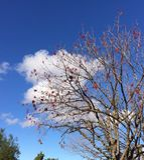 Árvore do inverno Foto de Stock