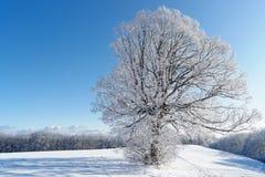Árvore do inverno, Alemanha fotografia de stock royalty free