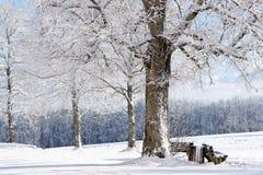 Árvore do inverno, Alemanha imagens de stock
