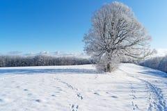 Árvore do inverno, Alemanha fotos de stock