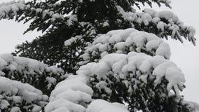 Árvore do inverno coberta com a neve Ramo de árvore coberto com a neve filme
