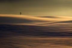 Árvore do inverno no campo ondulado Fotografia de Stock
