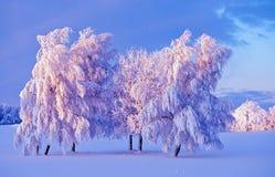 Árvore do inverno no crepúsculo imagem de stock royalty free