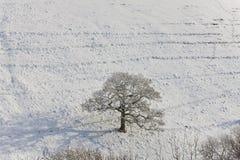 Árvore do inverno, Reino Unido imagens de stock
