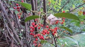 Árvore do jardim Imagem de Stock Royalty Free