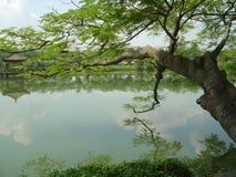 Árvore do lago fotos de stock