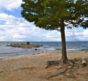 Árvore do Lago Baikal, Rússia. Imagens de Stock