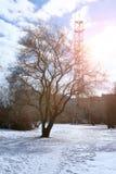 Árvore do lanscape da mola da aproximação amigável Foto de Stock