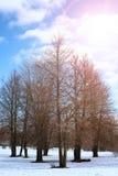 Árvore do lanscape da mola da aproximação amigável Fotografia de Stock Royalty Free