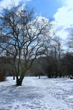 Árvore do lanscape da mola da aproximação amigável Fotografia de Stock