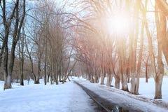 Árvore do lanscape da mola da aproximação amigável Fotos de Stock Royalty Free