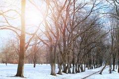 Árvore do lanscape da mola da aproximação amigável Imagens de Stock Royalty Free