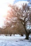 Árvore do lanscape da mola da aproximação amigável Imagens de Stock