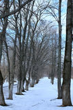 Árvore do lanscape da mola da aproximação amigável Imagem de Stock Royalty Free