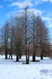 Árvore do lanscape da mola da aproximação amigável Fotos de Stock