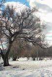 Árvore do lanscape da neve da aproximação amigável Imagem de Stock Royalty Free