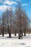 Árvore do lanscape da neve da aproximação amigável Fotografia de Stock Royalty Free
