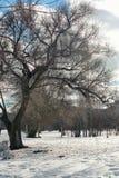 Árvore do lanscape da neve da aproximação amigável Imagem de Stock