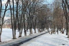 Árvore do lanscape da neve da aproximação amigável Foto de Stock