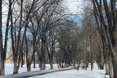 Árvore do lanscape da neve da aproximação amigável Imagens de Stock Royalty Free