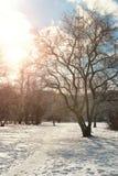 Árvore do lanscape da neve da aproximação amigável Fotos de Stock Royalty Free