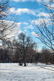 Árvore do lanscape da neve da aproximação amigável Imagens de Stock