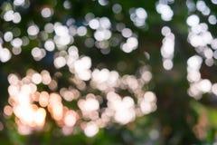 Árvore do ligh de Bokeh Imagem de Stock