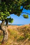 Árvore do litoral Foto de Stock