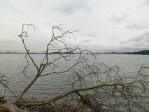 Árvore do mar imagens de stock