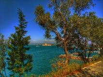 Árvore do mar Imagens de Stock Royalty Free