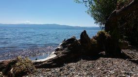 Árvore do mar Fotos de Stock Royalty Free