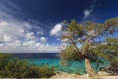 Árvore do Mesquite Imagens de Stock Royalty Free