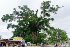 Árvore do milênio na prensa Imagem de Stock