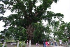 Árvore do milênio na prensa Imagens de Stock Royalty Free