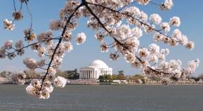 Árvore do monumento e de cereja Foto de Stock