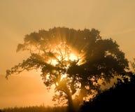 Árvore do nascer do sol fotos de stock