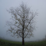 Árvore do oleiro Imagem de Stock Royalty Free